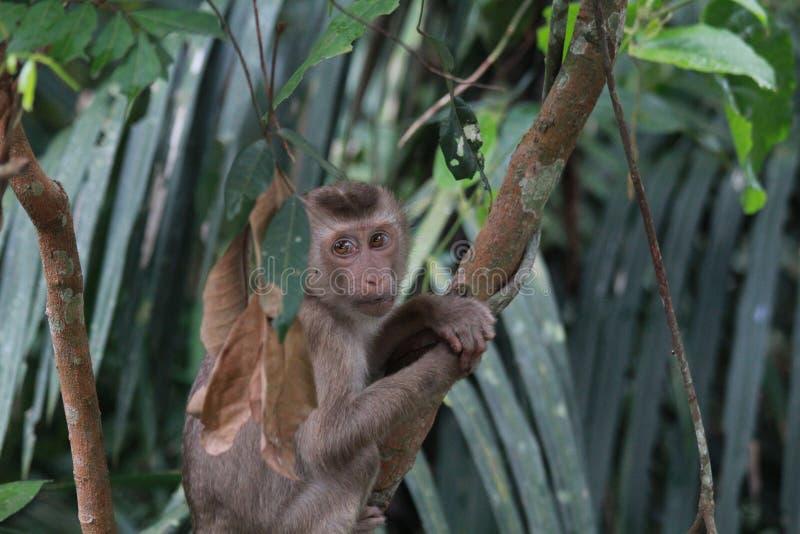 Een kleine aap op de boom royalty-vrije stock afbeelding