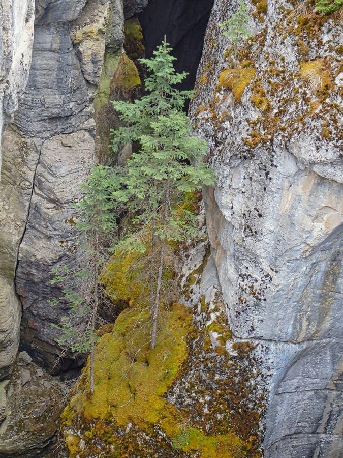 een kleine boom in de rotsen royalty-vrije stock foto