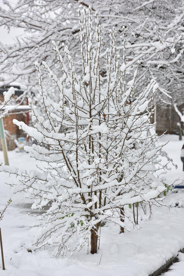 Een kleine boom onder sneeuw in April stock afbeeldingen