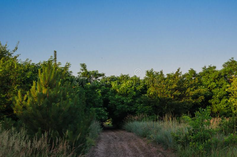 Een kleine bosweg onder struikgewas van wilde acacia De weg die tot de kreek leiden Ochtendsporten die in het hout aanstoten royalty-vrije stock foto's