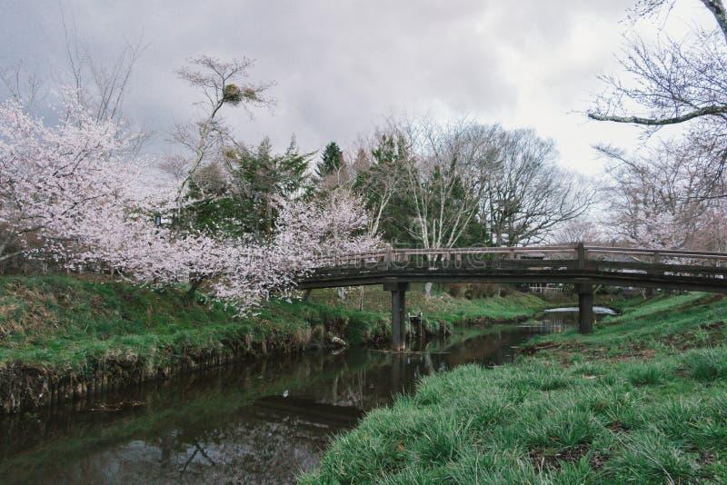Een kleine brug over een kreek met vele bomen en gras photoed stock afbeelding