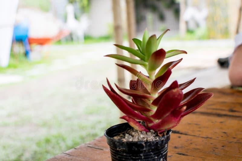 Een kleine cactus wordt geplaatst op een lijst bij een koffiewinkel royalty-vrije stock afbeeldingen