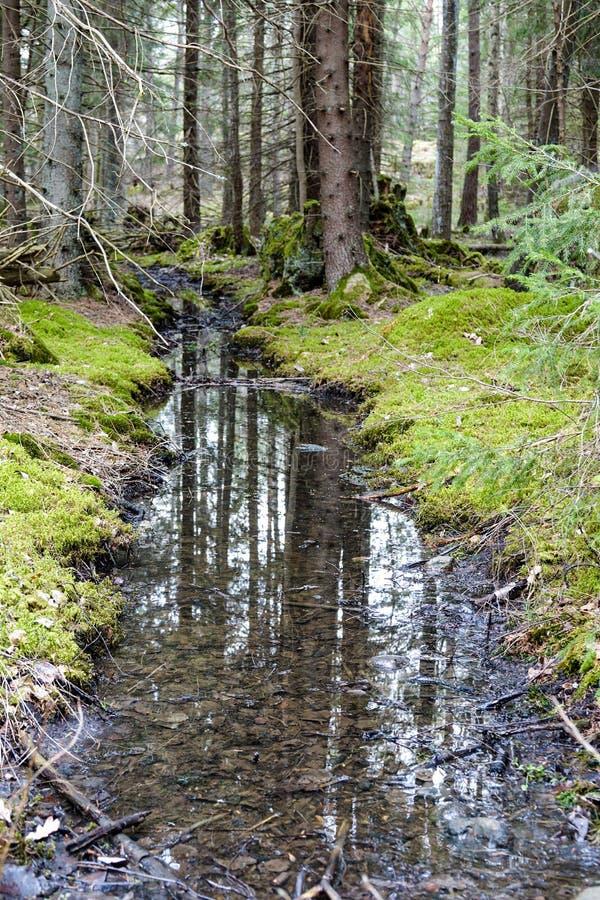 Een kleine de lentebeek in een groen bemost bos stock afbeeldingen