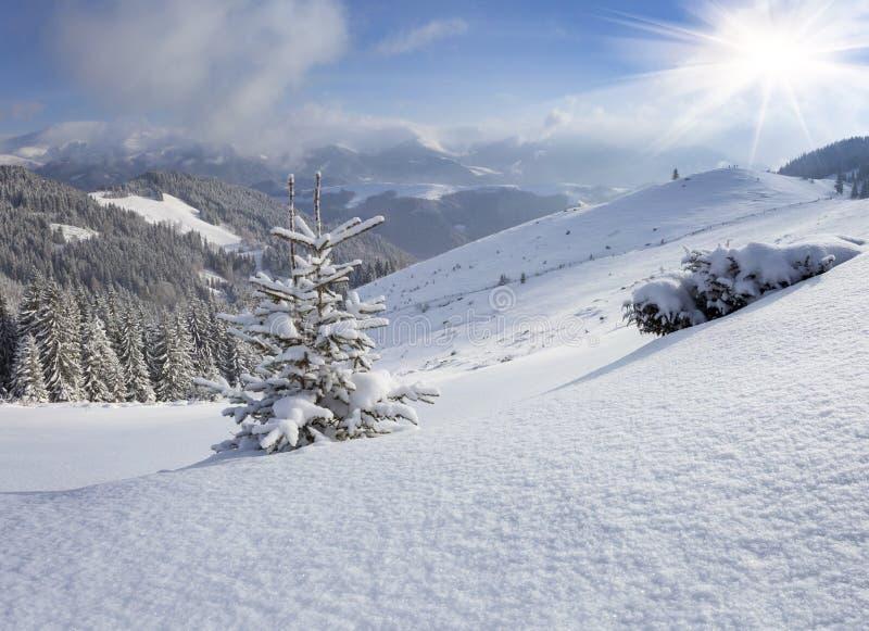 Een kleine die Kerstboom met sneeuw in de winterbergen wordt behandeld stock foto's