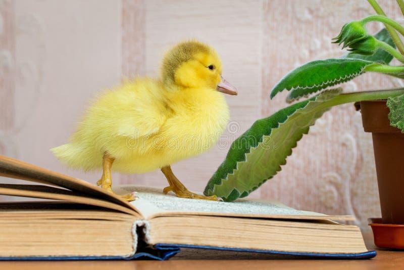 Een kleine gele eend dichtbij het open boek Lezing Fiction_ stock fotografie