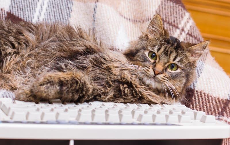 Een kleine gestreepte kat is dichtbij het computertoetsenbord Het vermijden van work_ royalty-vrije stock afbeeldingen