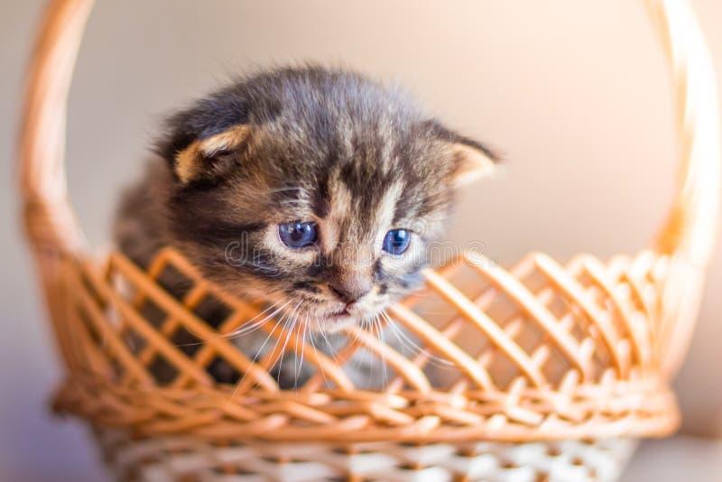 Een kleine gestreepte kat kijkt uit mand Een pot in een mand FO stock afbeelding