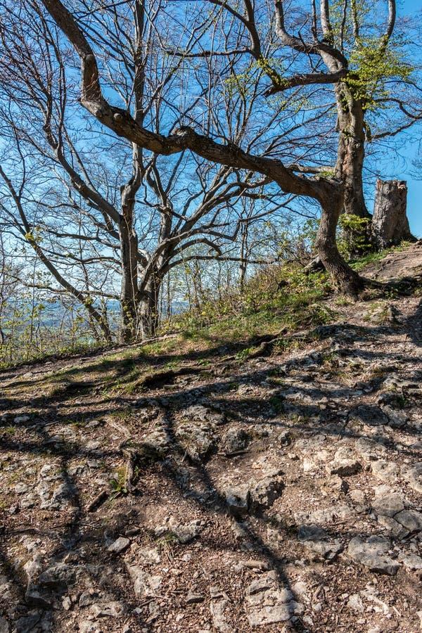 Een kleine heuvel met stenen, bomen en wortels royalty-vrije stock fotografie