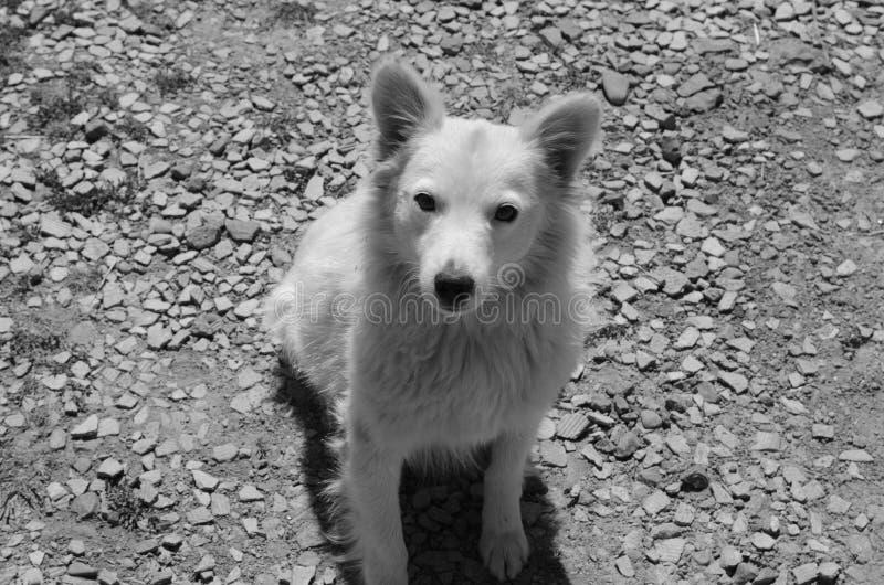 Een kleine hond royalty-vrije stock afbeeldingen