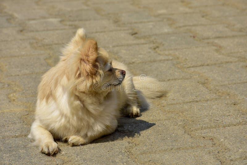 Een kleine hondzitting die op hoop wachten royalty-vrije stock afbeelding