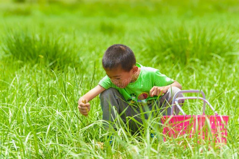 Een kleine jongen met een mand op het gras stock foto's