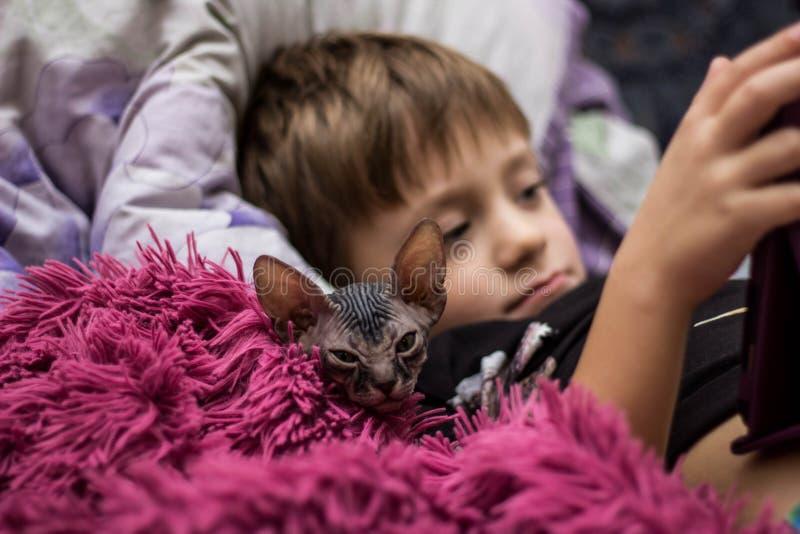 Een kleine jongen met een kale kattensfinx ligt in bed onder een rode deken en bekijkt de tablet stock afbeelding
