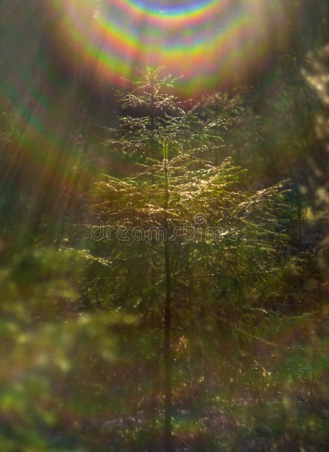 Een kleine Kerstboom glanst in de zon in het bos royalty-vrije stock foto's