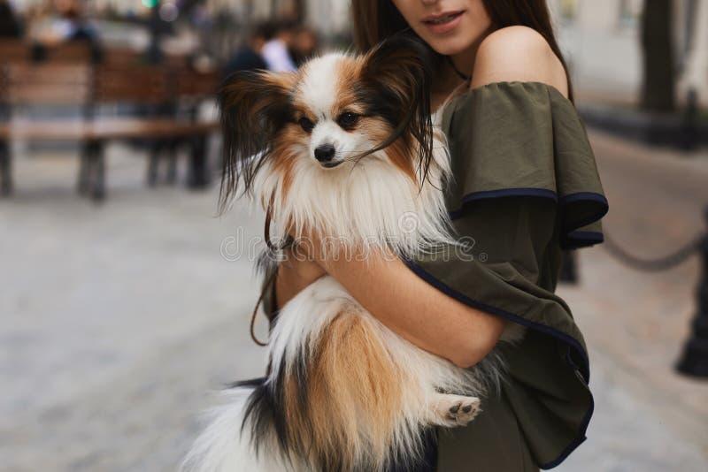 Een kleine leuke papillonhond op de handen van een mooi en vrolijk donkerbruin modelmeisje in het korte kleding stellen in openlu stock fotografie