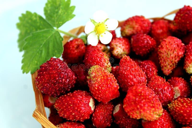 Een kleine mand van heerlijke sappige rijpe wilde aardbeien stock afbeeldingen