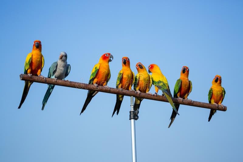 Een kleine multi-colored papegaai op een tak royalty-vrije stock fotografie