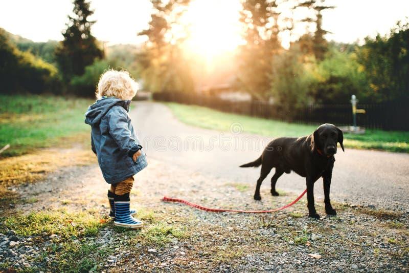 Een kleine peuterjongen en een hond in openlucht op een weg bij zonsondergang stock foto