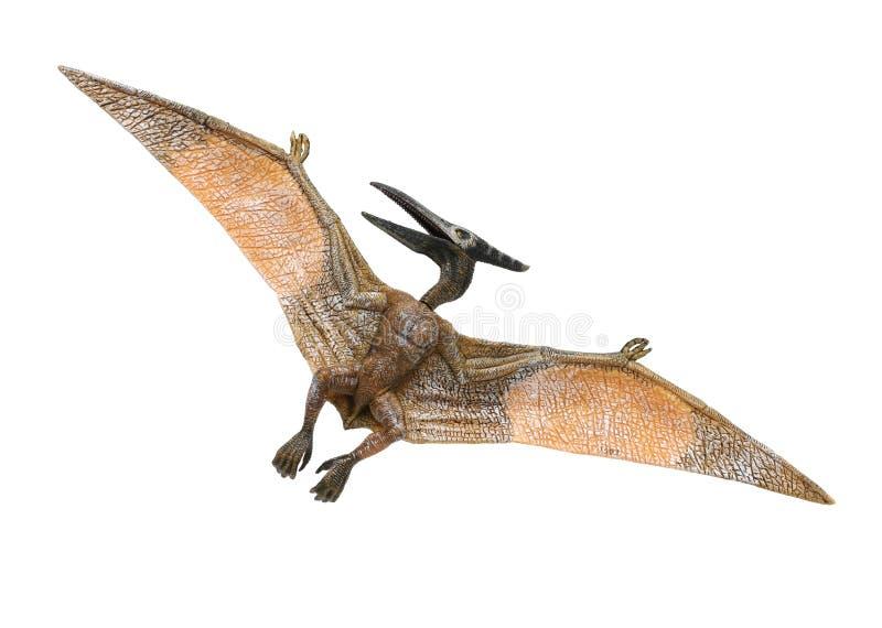 Een kleine rode en gele Pterodactylusstuk speelgoed voorzijde en een rug die aan zijn linkerzijde kijken royalty-vrije stock foto's
