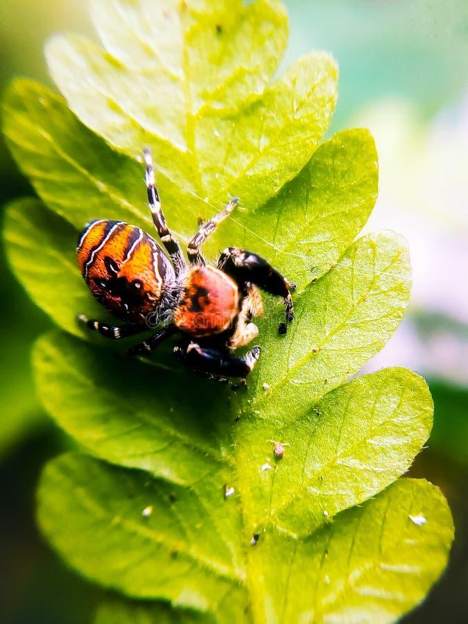 een kleine spin in een blad stock afbeeldingen
