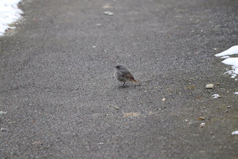 Een kleine vettige vogel die op wat voedsel wachten stock foto's