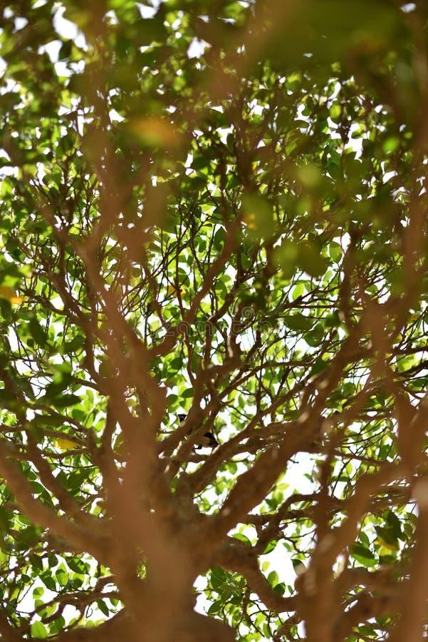 Een kleine vogel die zich op een bonsaiboom bevinden royalty-vrije stock foto's