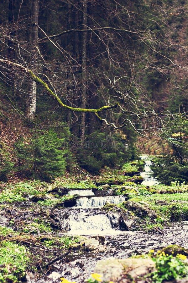 Een kleine waterval Bergrivier in de Karpaten stock afbeelding