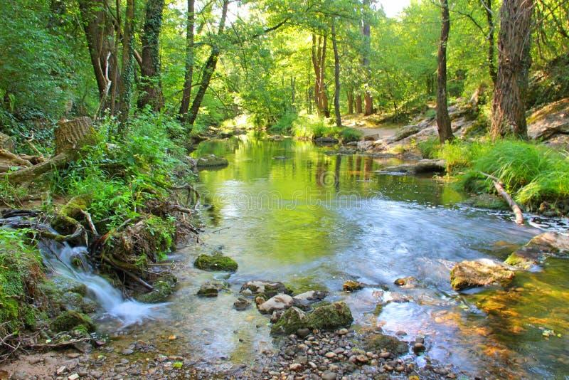 Een kleine waterval die in een rivier in een bos stromen stock afbeelding