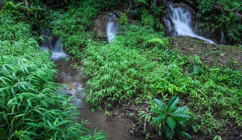 Een kleine waterval in het boshoogtepunt van groene bomen royalty-vrije stock foto's