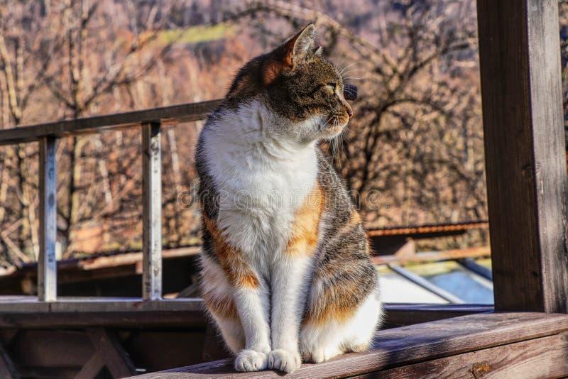 Een kleurrijke binnenlandse kat wordt genoemd Liza-zitting op verschansing in pergola op de tuin in zondag, lettend op sommige vo stock afbeeldingen