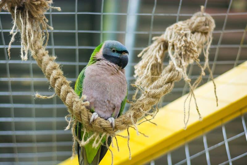 Een kleurrijke papegaai zit op een kabel royalty-vrije stock foto's