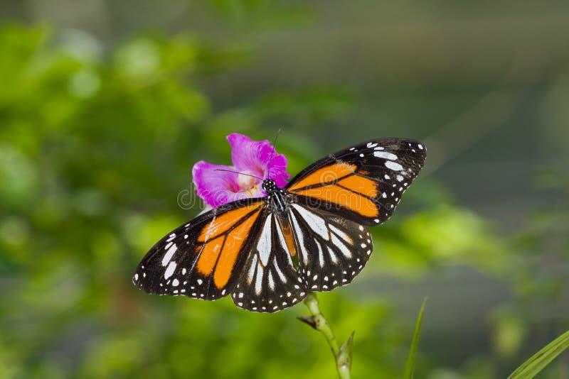 Een kleurrijke vlinder op een orchideebloem stock foto