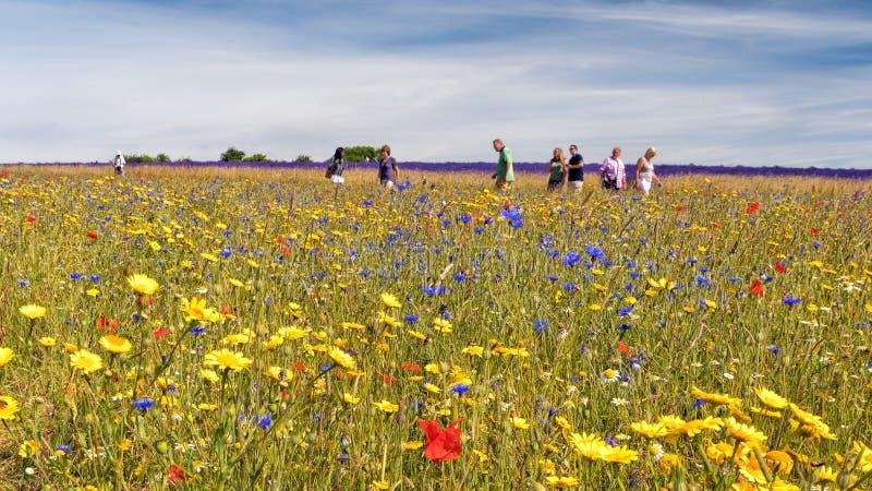 Een kleurrijke Wildflower-Weide, Worcestershire, Engeland stock foto's