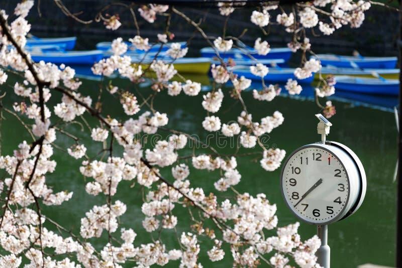 Een klok onder de de mooie bomen en roeiboten die van de kersenbloesem op het groene water op achtergrond in het Stedelijke Park  royalty-vrije stock afbeeldingen