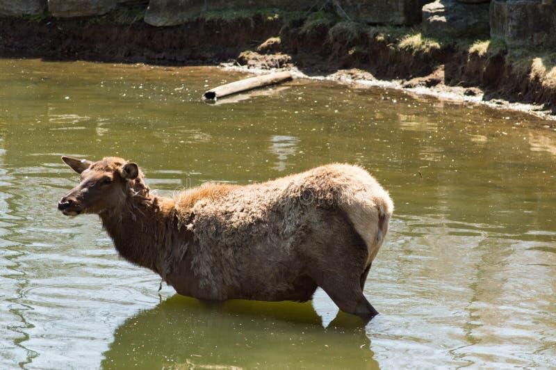 Een koeeland stock foto's