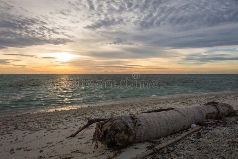 Een kokospalmlogboek op het strand van met kleurrijke zonsondergang of zonsopganghemel wordt verlaten die stock afbeeldingen