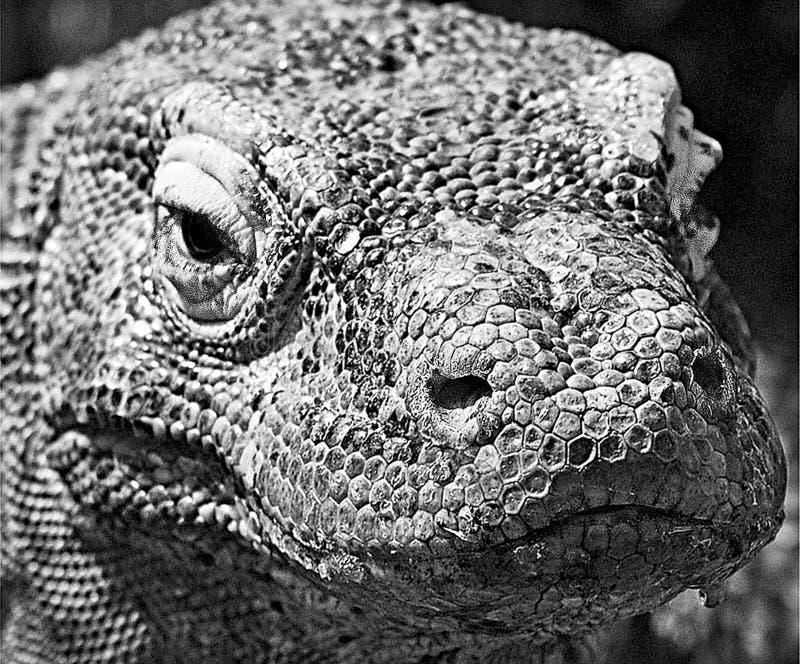Een Komodo Dragon Varanus Komidoense stock foto's