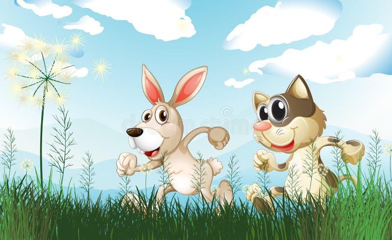 Een konijn en een kat bij het gebied vector illustratie