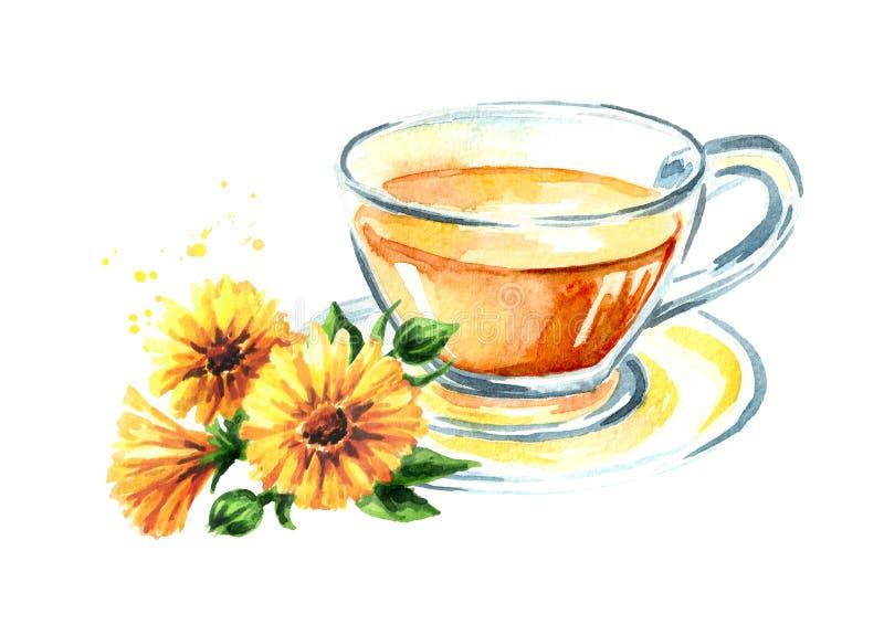 Een kop van de thee van de calendulagoudsbloem met bloem Waterverfhand getrokken die illustratie, op witte achtergrond wordt geïs royalty-vrije illustratie