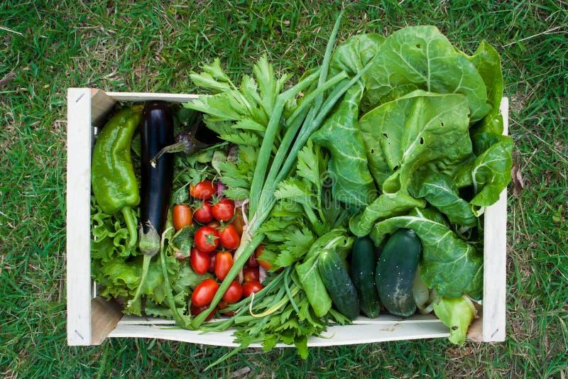 Een krat die van die groenten, aubergine, tomaten, komkommers, salade bevatten hierboven wordt gezien van Coriano, Emilia Romagna stock foto's