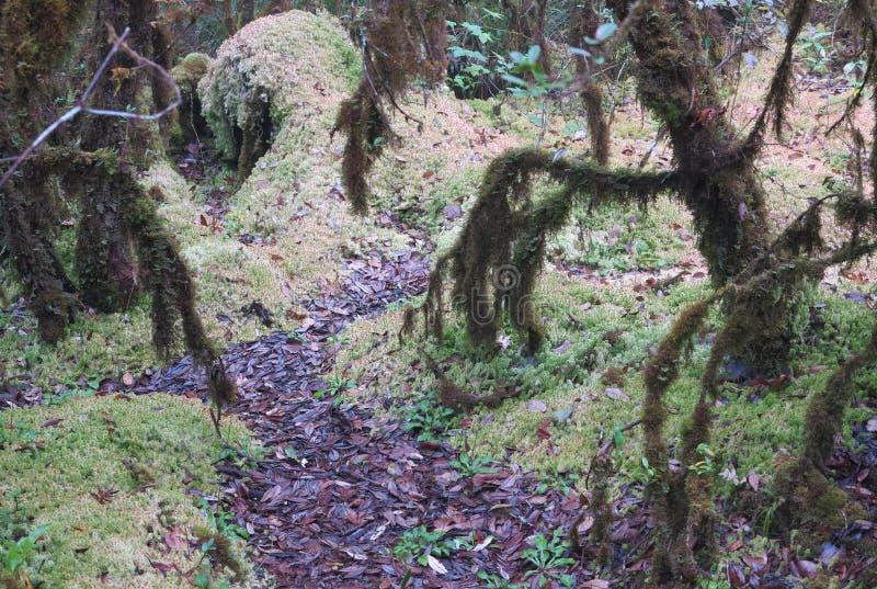 Een kreupelhout van een bos met kleurrijke wegen, bomen en grassen stock foto's