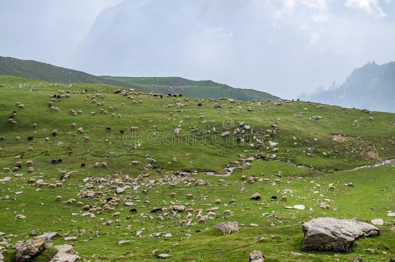 Een kudde in Himalayagebergte royalty-vrije stock fotografie