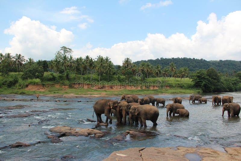 Een kudde van olifanten kwam aan de bar Een kudde van olifanten kwam aan de bar stock foto