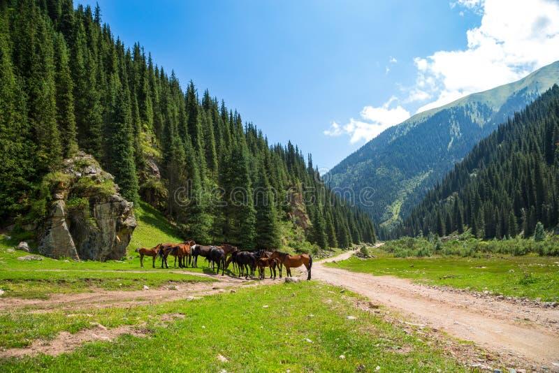 Een kudde van paarden stock foto's