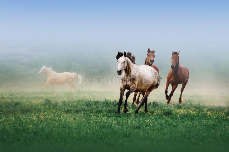 Een kudde van paarden die in de mist op een neutrale achtergrond galopperen stock afbeeldingen