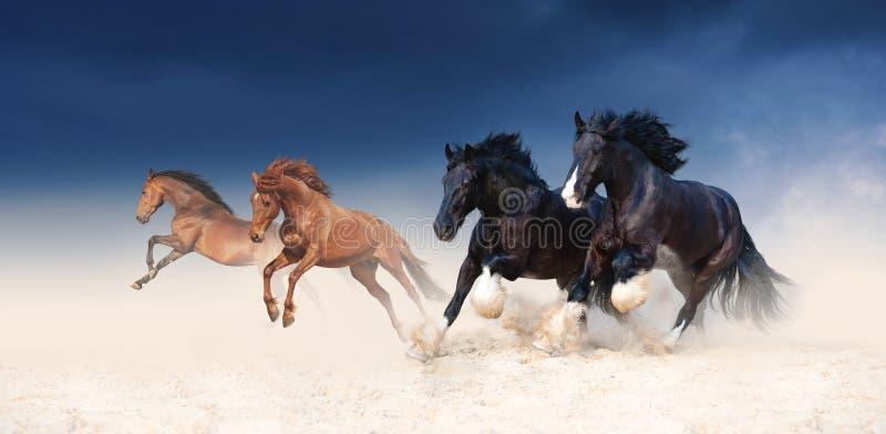 Een kudde van zwarte en rode paarden die in het zand tegen de achtergrond van een stormachtige hemel galopperen stock foto