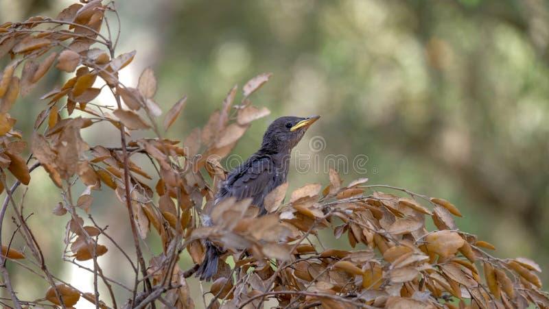 Een kuiken in een boom, een kleine vogel leert te vliegen stock afbeeldingen