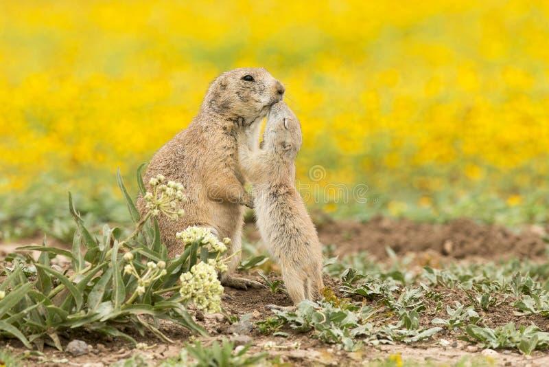 Een kus van liefde stock afbeelding