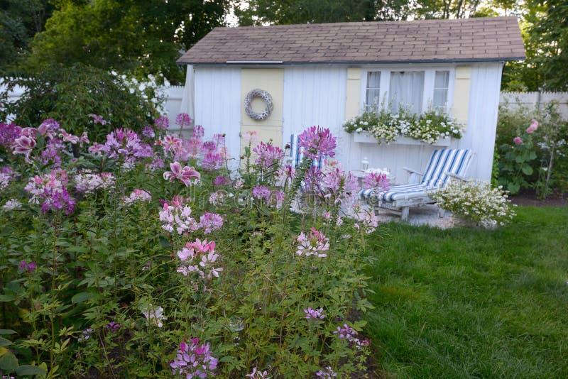 Een Kustplattelandshuisje en een Lavendel purpere Cleome van New England bloeien stock fotografie