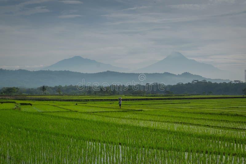 Een landbouwer stock foto