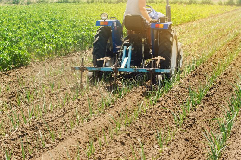 Een landbouwer cultiveert plantaardige rijen van prei Ploegend gebied Onkruidbescherming Het seizoengebonden landbouwbedrijfwerk  stock afbeeldingen